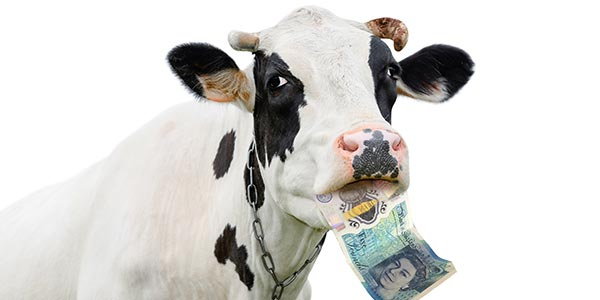 New UK five pound note contains trace amounts of animal fat