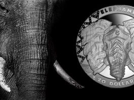 The same 1917 Walking Liberty Half Dollar after NCS conservation.