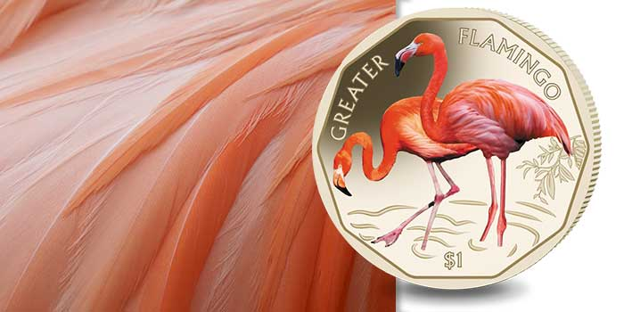 Greater Flamingo Featured on Fourth Coin in Pobjoy Mint Series
