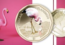 Andean Flamingo on fifth coin in 2019 British Virgin Island virenium series from Pobjoy Mint