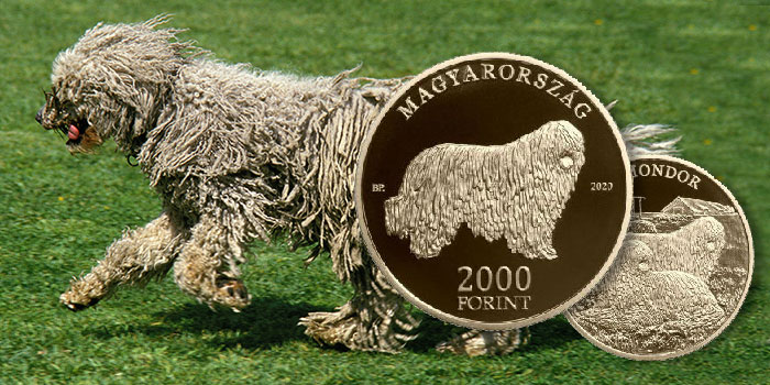 The Komondor: New Coin in Hungarian Dog Breed Series